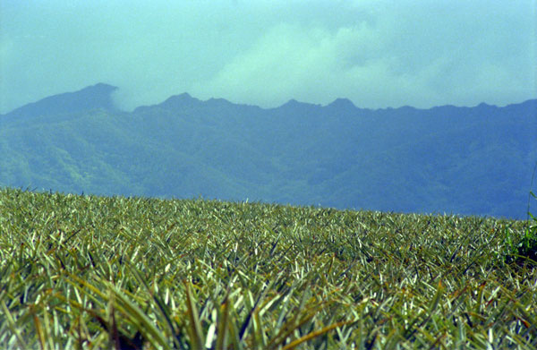 Pineapple Plantation, Oahu